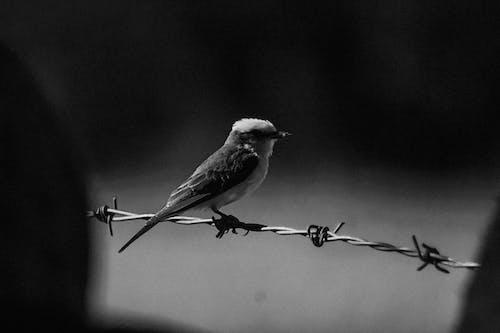 Δωρεάν στοκ φωτογραφιών με άγριο πουλί