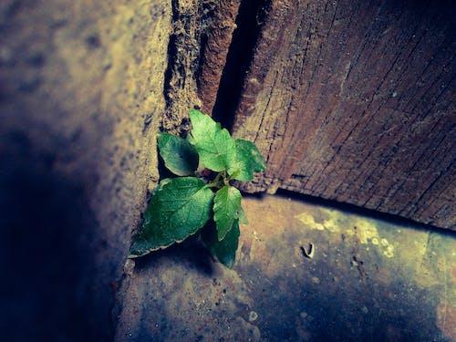 Nahaufnahmefoto Der Grünen Blattpflanze