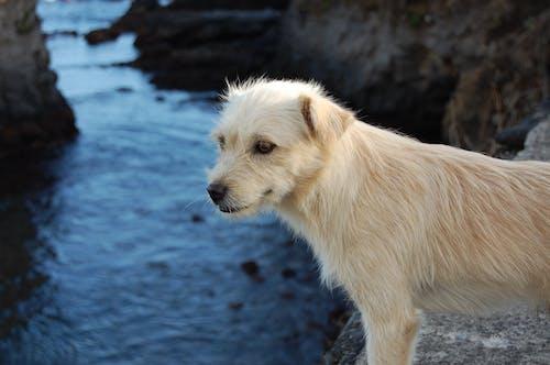 Foto stok gratis air, anjing, basah, berkembang biak