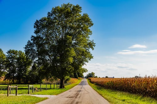 乾草地, 夏天, 天性, 天空 的 免费素材照片