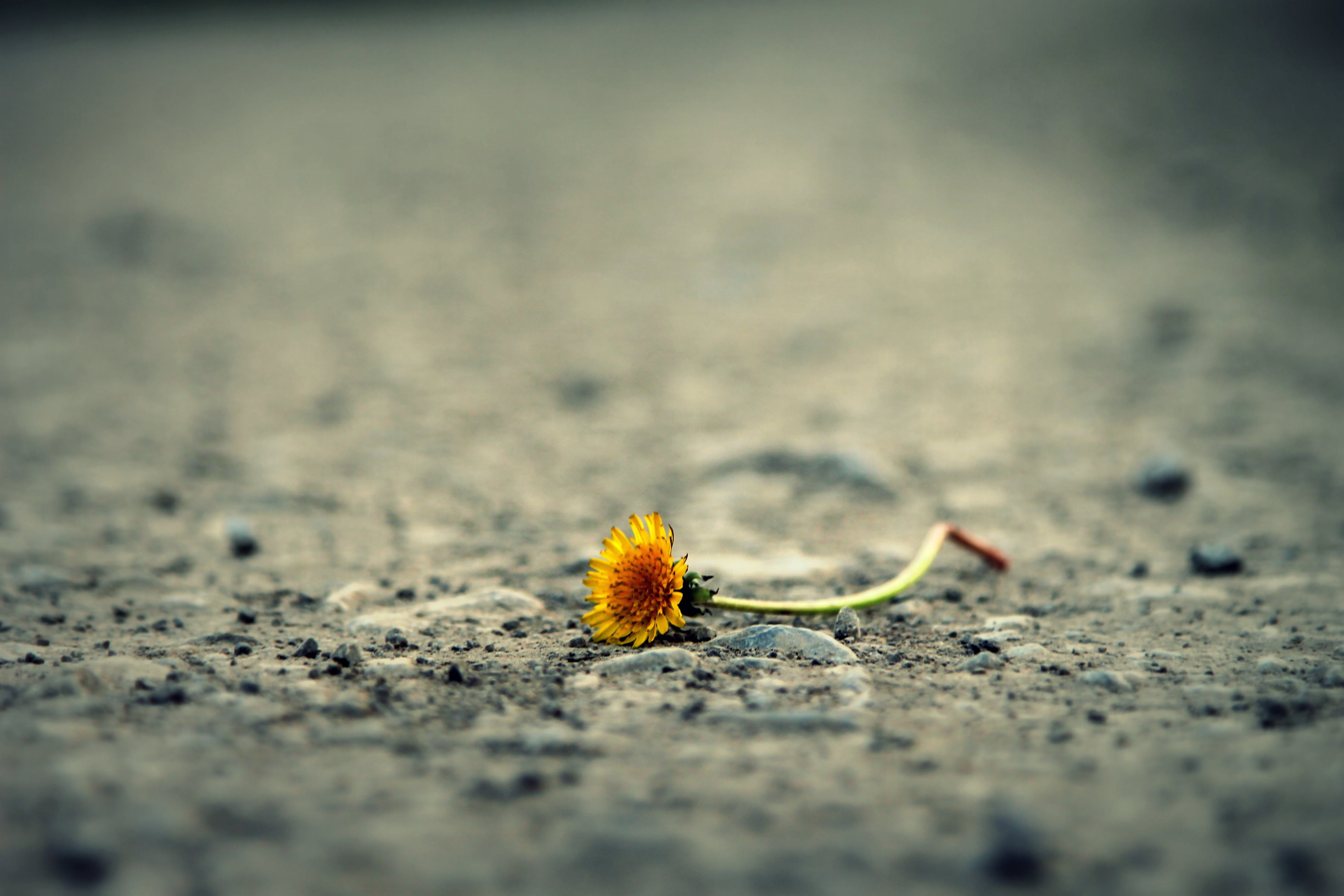 Close-up of Flower on Sand