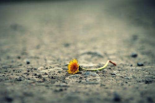 Fotobanka sbezplatnými fotkami na tému dno, flóra, kvet, kvet ovocného stromu