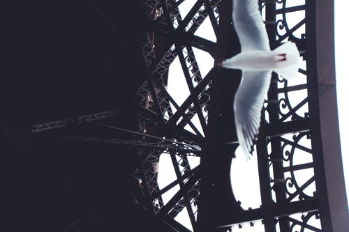 Free stock photo of bird, eiffel tower, fly, france