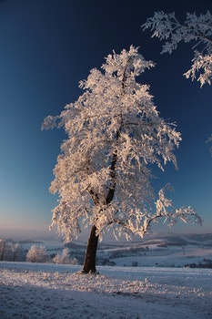 Tree on Snow Covered Landscape
