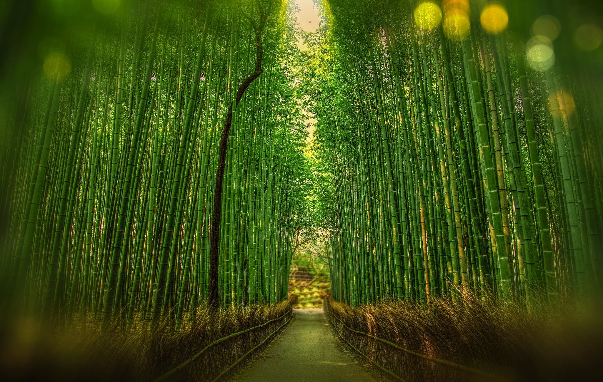 Scenic View of Bamboo Trees