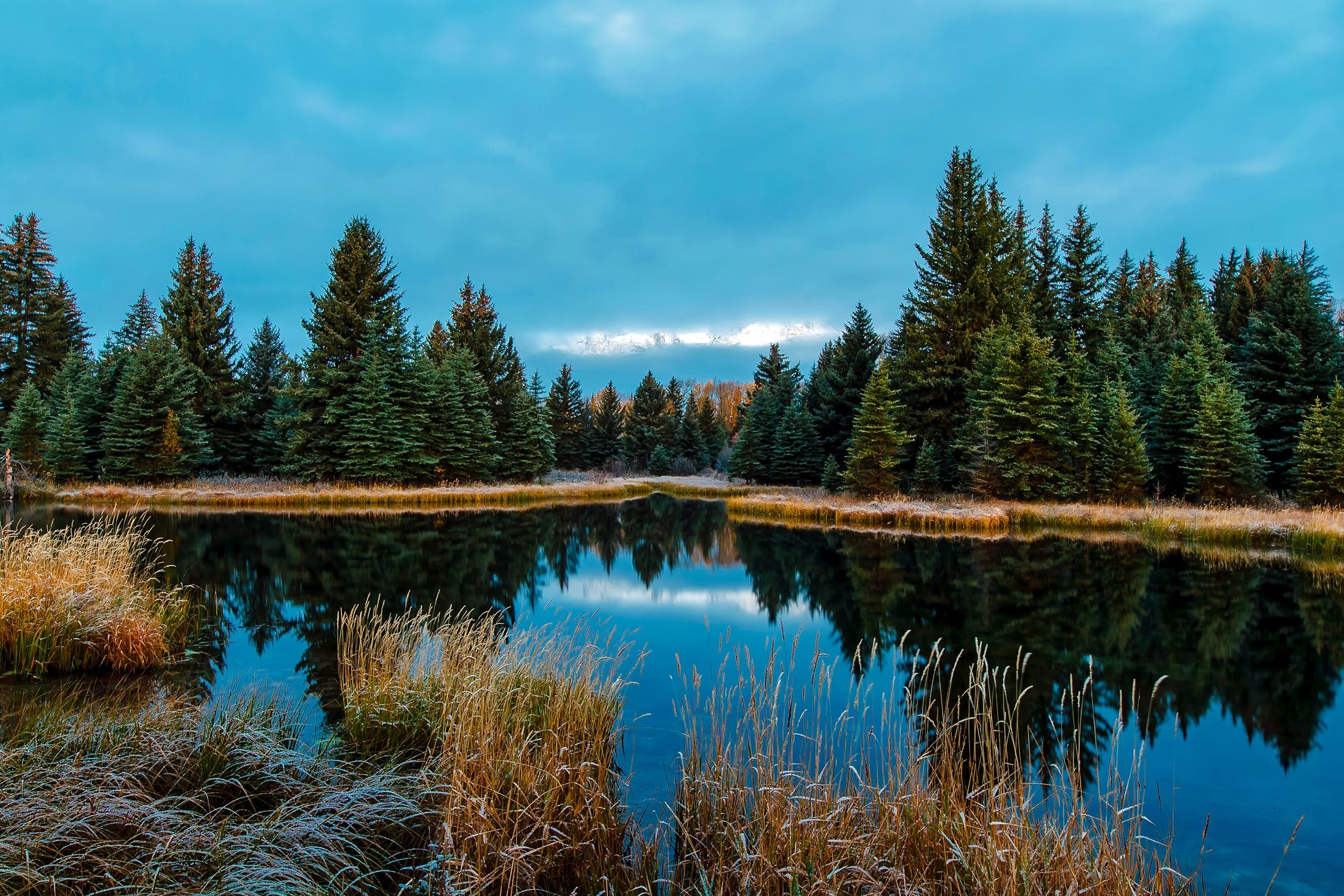 Panoramic View of Lake in Forest