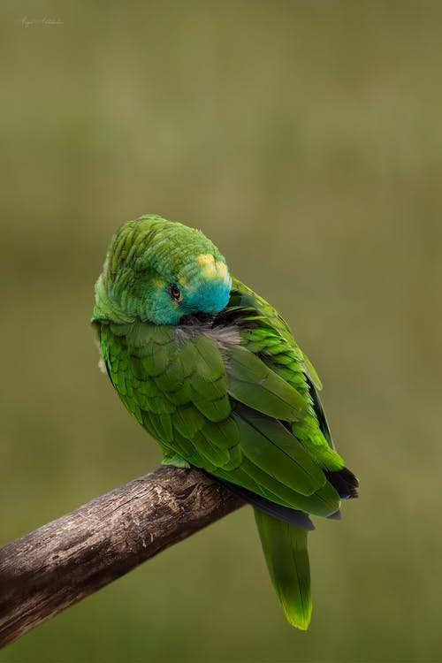 Green Bird Perched on Brown Branch
