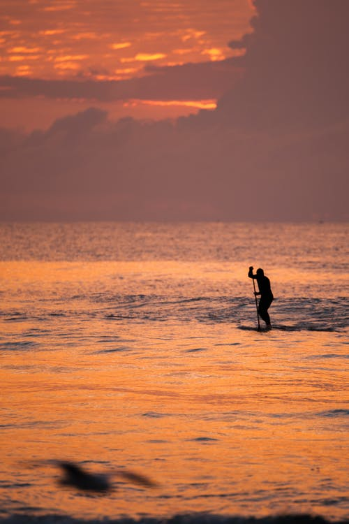 Silhouette Photo of Person riding a paddle-board during golden hour