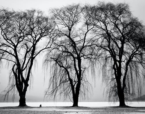 Foto profissional grátis de árvores, filiais, inverno, P&B