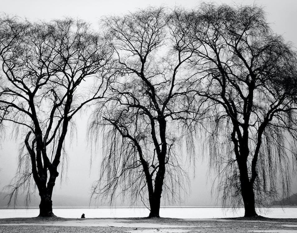 гілки, дерева, зима