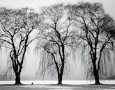 black-and-white, trees, winter