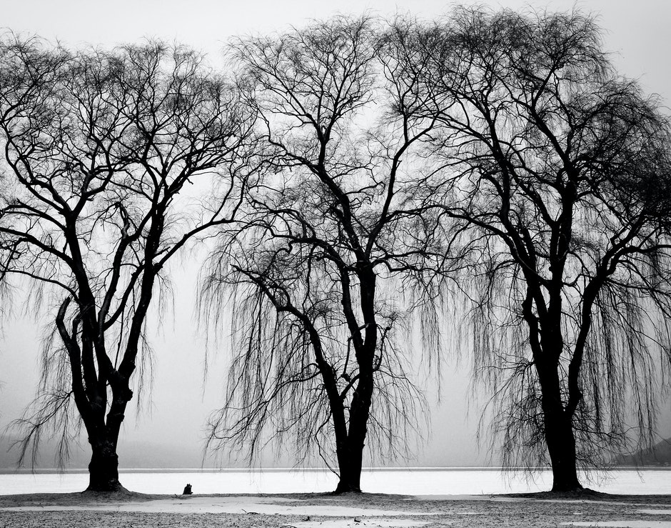black-and-white, branches, three