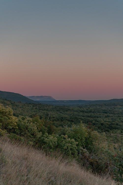 Fotos de stock gratuitas de África, aventurero, bosque, colores del arco iris