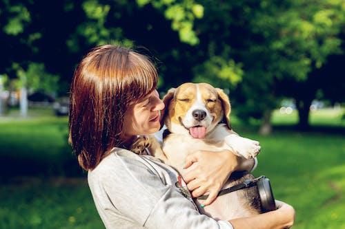 一起, 動物, 友誼, 國內 的 免費圖庫相片
