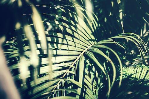 Gratis lagerfoto af blade, Botanisk, close-up, dagslys