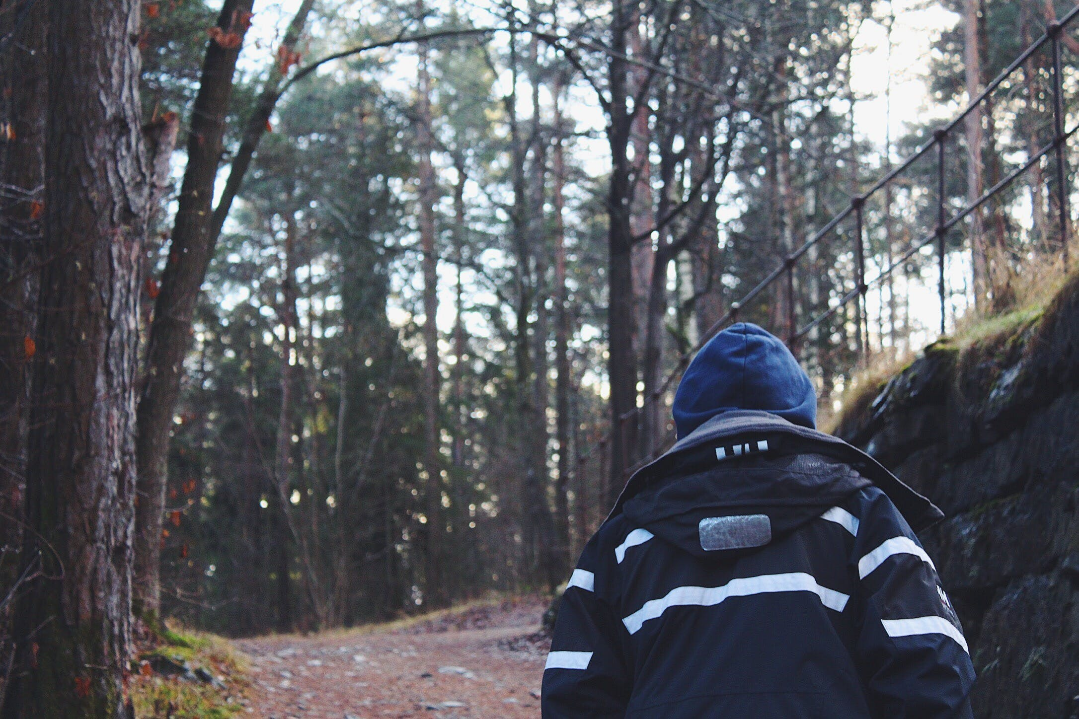 Back View of Man in Forest