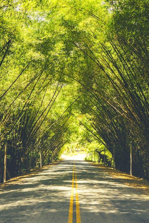 Foto Jalan Aspal Kosong Dengan Jalur Kuning Di Antara Kanopi Pepohonan Berdaun Hijau