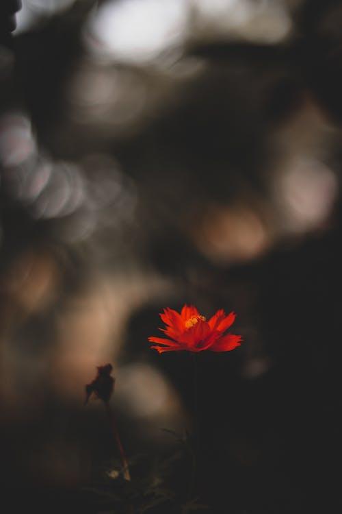 Darmowe zdjęcie z galerii z bokeh, delikatny, flora, głębia pola
