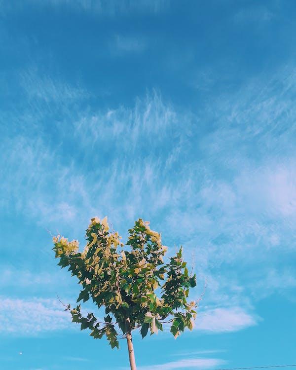 写真撮影, 木, 空