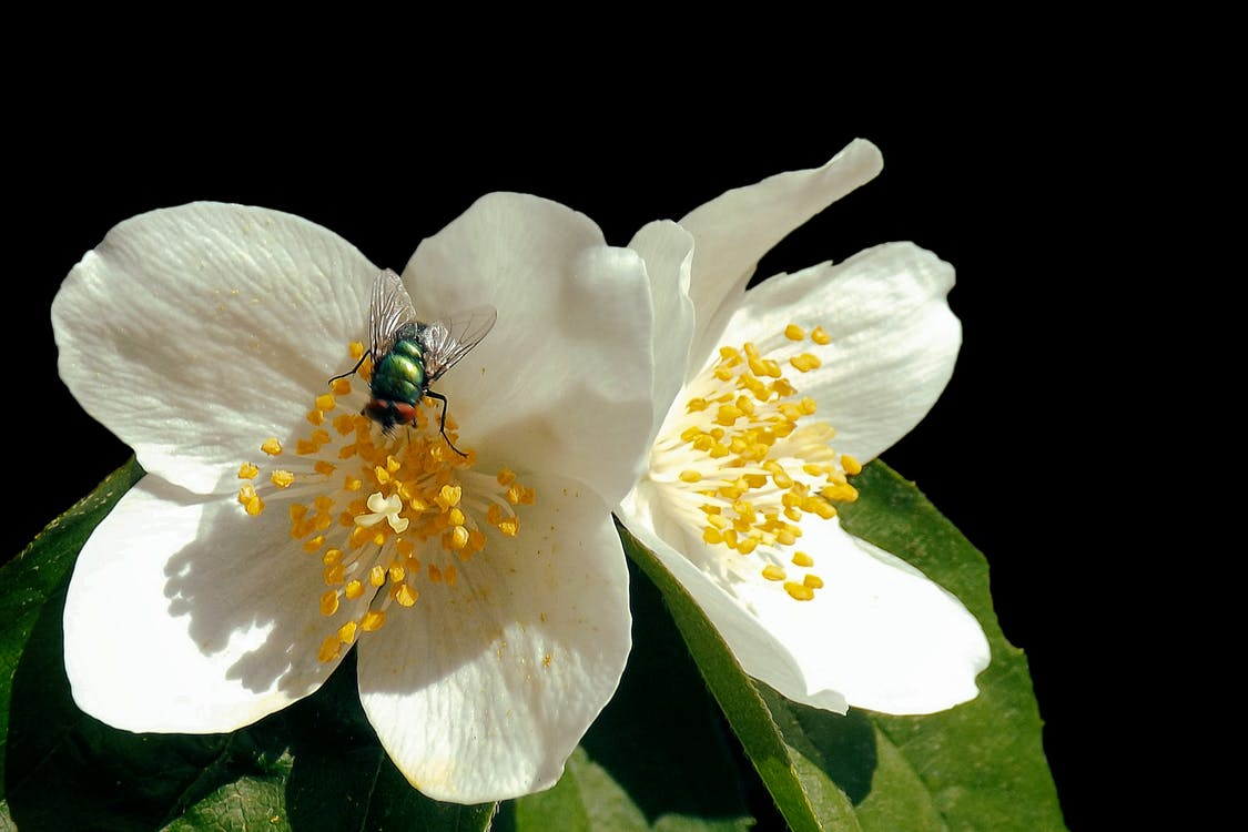 Close-up of Insect on Flower Against Black Background