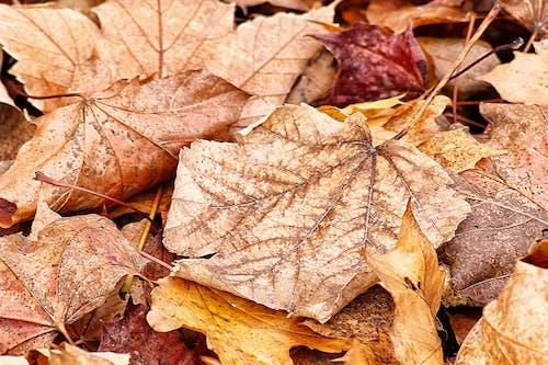 Бесплатное стоковое фото с осенние цвета, падающие листья