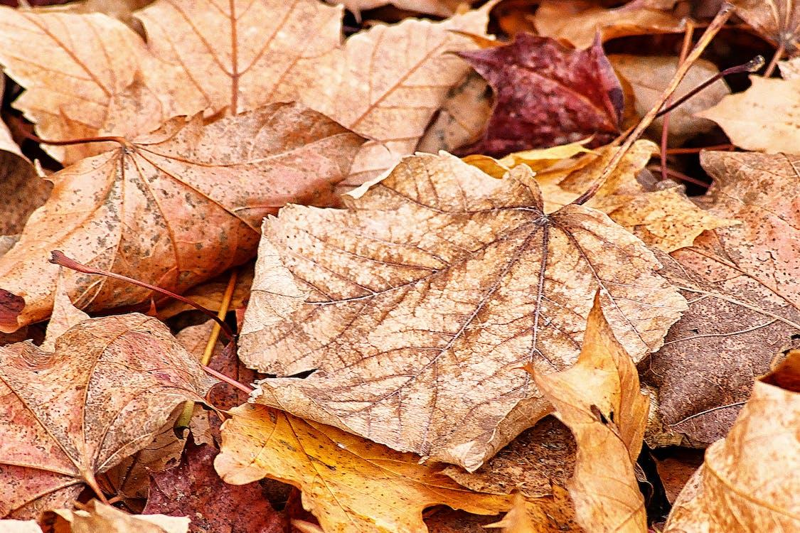 güz renkleri, güz yaprakları, kuru yapraklar içeren Ücretsiz stok fotoğraf