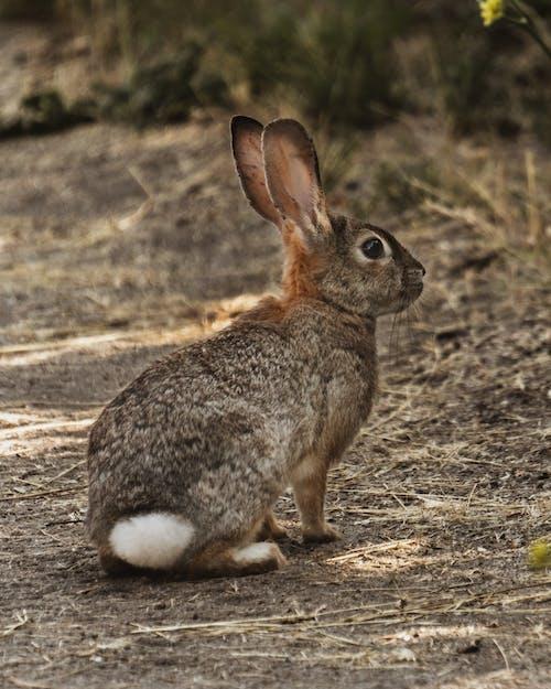 귀여운 동물, 자연, 자연 생활, 자연의 아름다움의 무료 스톡 사진