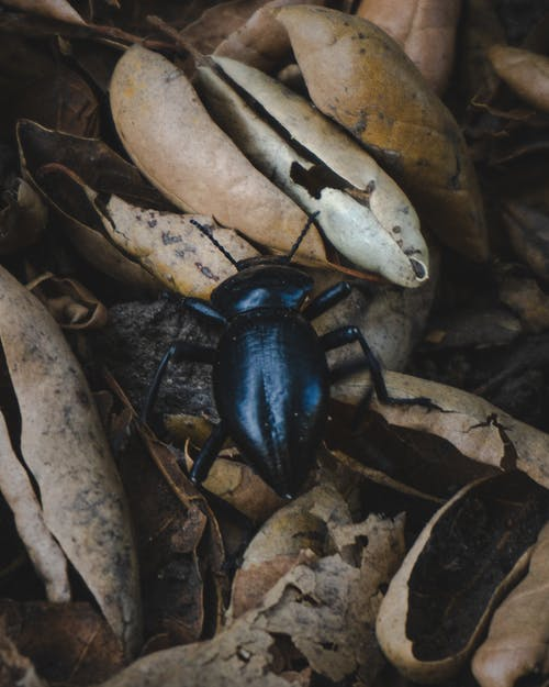딱정벌레, 벌레, 자연, 자연 생활의 무료 스톡 사진