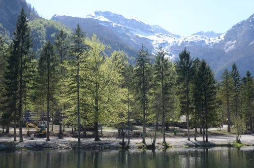 Green Pine Trees Near A Lake