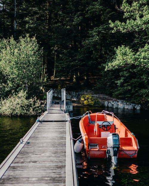 Ảnh lưu trữ miễn phí về bến tàu, cây cao, hồ, màu