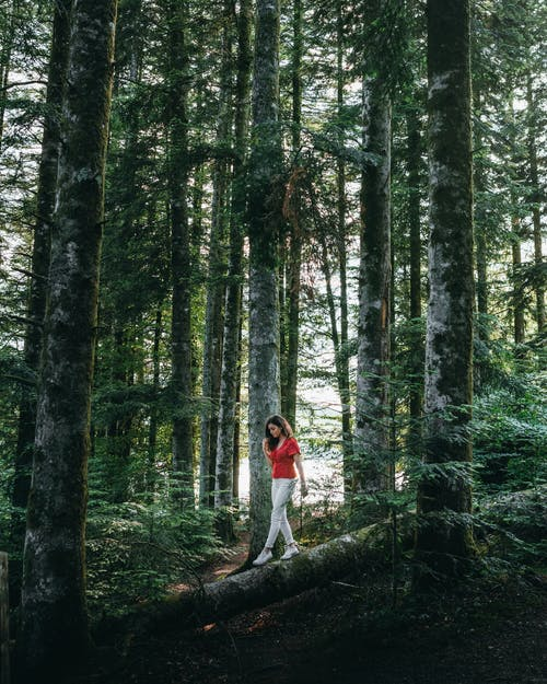 Photo of Woman in Red V-neck Top  Walking on a  Tree Log Between Trees