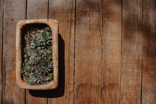 Gratis lagerfoto af blomster, grønne planter, skål, sukkulenter