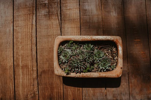 Close up Photo of Potted Green Succulent Plants on a Brown  Wooden Board