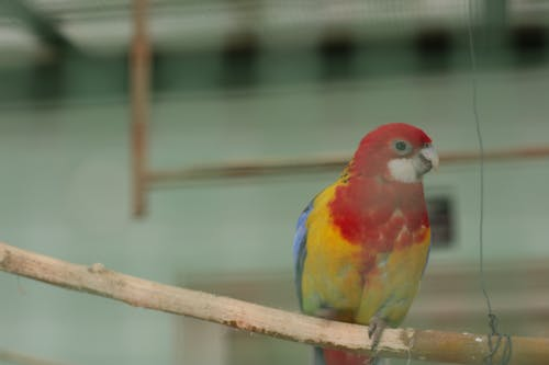 Foto profissional grátis de papagaio, papgei, pena de pássaro