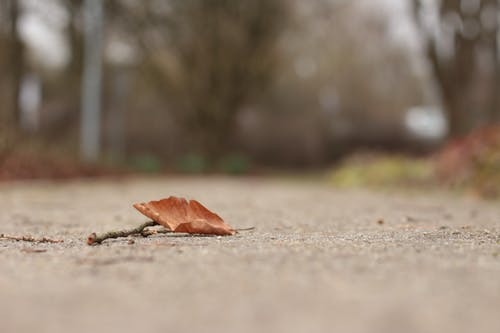 Foto profissional grátis de ao ar livre, folha seca, folhas caídas, folhas de outono