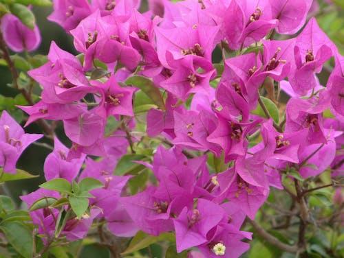 Ingyenes stockfotó gyár, kert, lila, rózsaszín témában