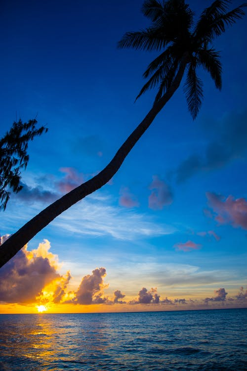 Coconut Tree in Beach during Golden Hour