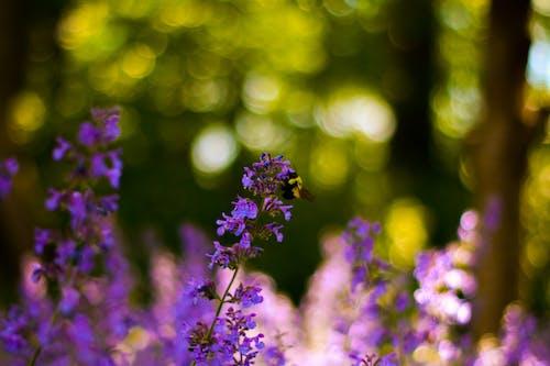 Fotobanka sbezplatnými fotkami na tému včela na kvete
