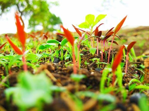 Безкоштовне стокове фото на тему «зелена трава»