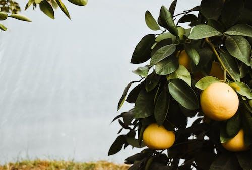 Foto d'estoc gratuïta de a l'aire lliure, agricultura, arbre, branques d'arbre