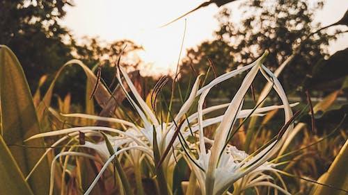 Gratis lagerfoto af fokus, HD-baggrund, sløret baggrund, smuk blomst