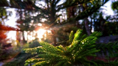 太陽フレア, 緑の無料の写真素材