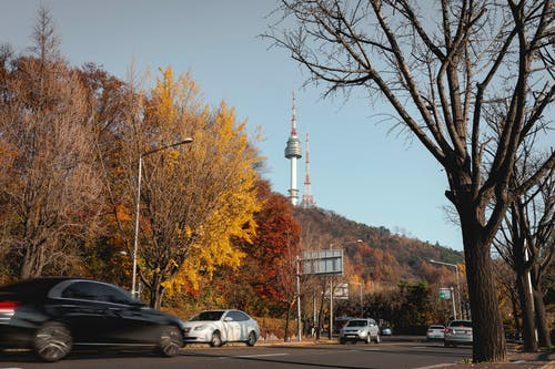 Free stock photo of autumn, fall, fall foliage, foliage