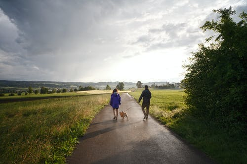 Man and Woman Walking Dog on Tarmacked Road