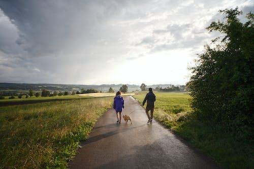 คลังภาพถ่ายฟรี ของ กลางวัน, การเดิน, คนกำลังเดิน, คนกำลังเดินสุนัข