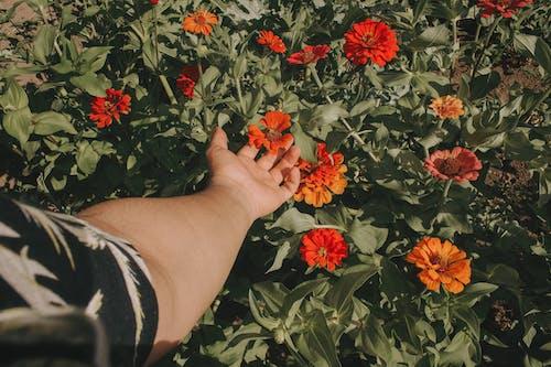 개념, 계절, 꽃, 꽃이 피는의 무료 스톡 사진