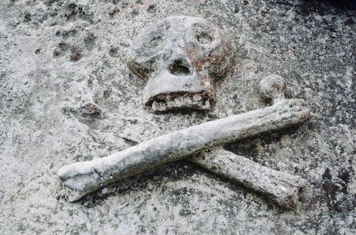 Fotobanka sbezplatnými fotkami na tému lebka, smrť