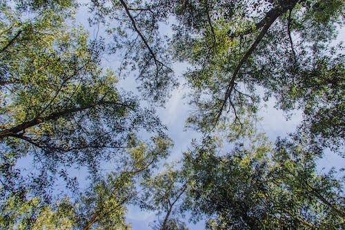 Ilmainen kuvapankkikuva tunnisteilla luonnollinen, puu, taivas