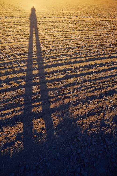 乾的, 土, 太陽, 日出 的 免費圖庫相片