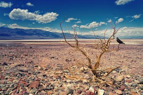 boş arazi, çıplak ağaca, çöl, dağ içeren Ücretsiz stok fotoğraf